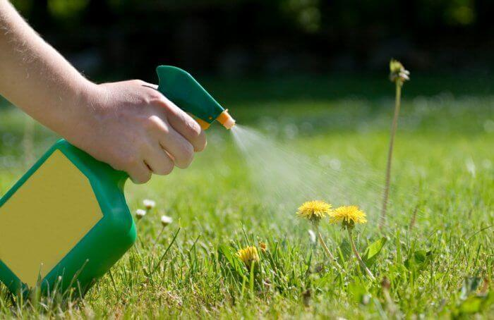 Tips For How and When To Apply Weed Killer to Your Lawn