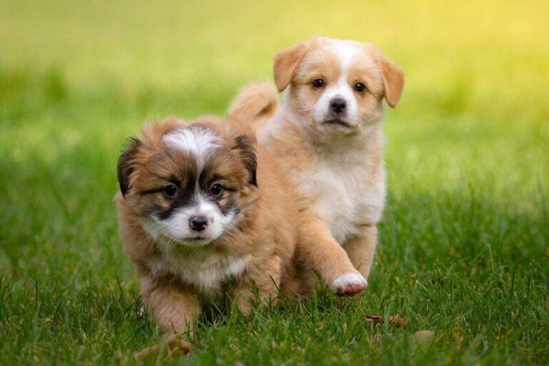 Pet safe weed killing e1583385090110